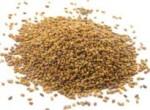 Alfalfa Seed 50 gram